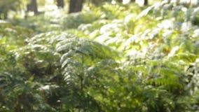 Θαμπάδα υποβάθρου ζουγκλών απόθεμα βίντεο