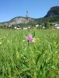 Θαμπάδα φακών λουλουδιών Στοκ Φωτογραφίες