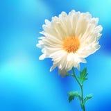 Θαμπάδα φύσης λουλουδιών backgound Στοκ Φωτογραφίες