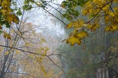 Θαμπό και όμορφο τοπίο φθινοπώρου Στοκ Εικόνες