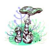 Θανάσιμο amanita μανιτάρι διανυσματική απεικόνιση