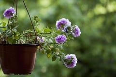Θαυμάσια άποψη ενός ανθισμένου λουλουδιού Στοκ φωτογραφία με δικαίωμα ελεύθερης χρήσης