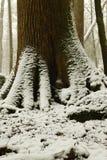 Θαυμάσια βάση κορμών δέντρων που καλύπτεται στο χιόνι στοκ φωτογραφία