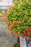 Θαυμάσια διακόσμηση λουλουδιών κιγκλιδώματα σε κακό Lippspringe Στοκ φωτογραφία με δικαίωμα ελεύθερης χρήσης