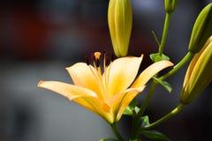 Θαυμάσια λουλούδια άνοιξη Στοκ φωτογραφίες με δικαίωμα ελεύθερης χρήσης