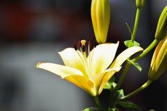 Θαυμάσια λουλούδια άνοιξη Στοκ Φωτογραφία