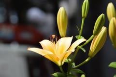Θαυμάσια λουλούδια άνοιξη Στοκ φωτογραφία με δικαίωμα ελεύθερης χρήσης