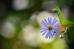 Θαυμάσια λουλούδια άνοιξη Στοκ εικόνα με δικαίωμα ελεύθερης χρήσης