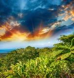 Θαυμάσιες δέντρα και βλάστηση του Queensland, Αυστραλία Στοκ εικόνα με δικαίωμα ελεύθερης χρήσης