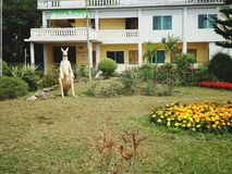 θαυμάσιος κήπος σπιτιών αγάπης στοκ εικόνες με δικαίωμα ελεύθερης χρήσης