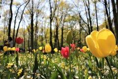 Θαυμάσιος κήπος τουλιπών σε Keukenhof στοκ φωτογραφία με δικαίωμα ελεύθερης χρήσης