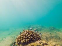 Θαυμάσιος και όμορφος υποβρύχιος κόσμος με τα κοράλλια και τα τροπικά ψάρια στοκ φωτογραφίες με δικαίωμα ελεύθερης χρήσης