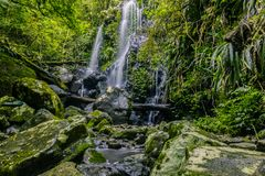 Θαυμάσιος καταρράκτης στη ζούγκλα στοκ εικόνες