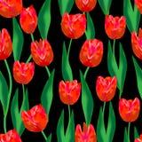 θαυμάσιος κόκκινες τουλίπες και καταπληκτικά πράσινα φύλλα σε ένα μαύρο υπόβαθρο Θαυμάσιο άνευ ραφής σχέδιο στοκ φωτογραφία με δικαίωμα ελεύθερης χρήσης