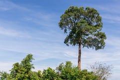 Θαυμάσιο δέντρο Στοκ εικόνα με δικαίωμα ελεύθερης χρήσης