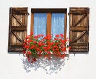 Θαυμάσιο ανθίζοντας παράθυρο με τα δοχεία των γερανιών στοκ εικόνα