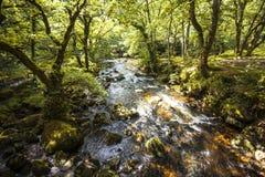 Θαυμάσιο δασόβιο τοπίο στα ξύλα Dewerstone στη νότια άκρη Dartmoor, Devon, Αγγλία Στοκ Εικόνες