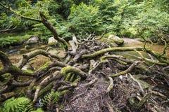 Θαυμάσιο δασόβιο τοπίο στα ξύλα Dewerstone στη νότια άκρη Dartmoor, Devon, Αγγλία Στοκ εικόνα με δικαίωμα ελεύθερης χρήσης