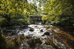 Θαυμάσιο δασόβιο τοπίο στα ξύλα Dewerstone στη νότια άκρη Dartmoor, Devon, Αγγλία Στοκ Εικόνα