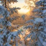 Θαυμάσιο ηλιοβασίλεμα στα βουνά του νότου Ural Άποψη του βουνού μέσω των δέντρων Στοκ φωτογραφία με δικαίωμα ελεύθερης χρήσης