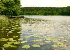 Θαυμάσιο andscape με την ήρεμη λίμνη νερού με την ξύλινη αποβάθρα και τα κίτρινα waterlilies, τους καλάμους, τα δέντρα και το δάσ Στοκ Εικόνα