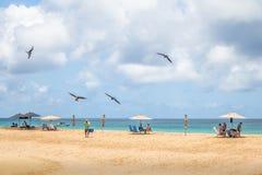 Θαυμάσιο Frigatebird που πετά πέρα από τους ανθρώπους στην παραλία Praia DA Conceicao - Fernando de Noronha, Pernambuco, Βραζιλία Στοκ εικόνα με δικαίωμα ελεύθερης χρήσης