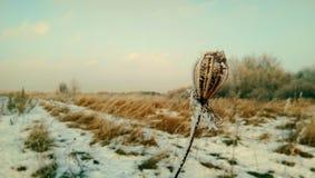 θαυμασμός στον τομέα Στοκ φωτογραφία με δικαίωμα ελεύθερης χρήσης