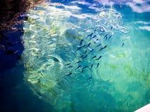 Θαλάσσια ζωή Στοκ εικόνα με δικαίωμα ελεύθερης χρήσης