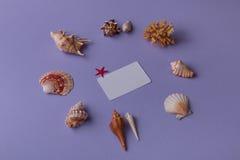 Θαλάσσια στοιχεία με την κάρτα bisiness Στοκ φωτογραφία με δικαίωμα ελεύθερης χρήσης