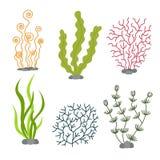 Θαλάσσια φυτά και υδρόβια θαλάσσια άλγη Καθορισμένη διανυσματική απεικόνιση φυκιών Στοκ Εικόνες
