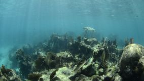 Θαλάσσια χελώνα. Στοκ εικόνες με δικαίωμα ελεύθερης χρήσης