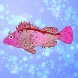 Θαλάσσια χοντροσκαλίδρα Στοκ φωτογραφία με δικαίωμα ελεύθερης χρήσης