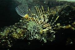 Θαλάσσια ψάρια Στοκ Φωτογραφίες