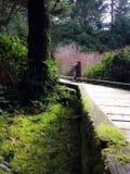 Θαλάσσιος περίπατος παραλιών Wikanninnish Στοκ εικόνες με δικαίωμα ελεύθερης χρήσης