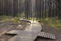 Θαλάσσιος περίπατος στο δάσος Στοκ Φωτογραφία