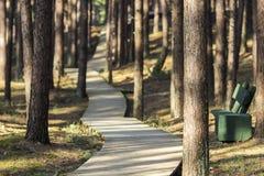 Θαλάσσιος περίπατος στο δάσος Στοκ φωτογραφία με δικαίωμα ελεύθερης χρήσης