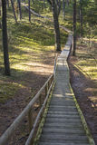Θαλάσσιος περίπατος στο δάσος Στοκ Εικόνα