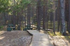 Θαλάσσιος περίπατος στο δάσος Στοκ Εικόνες