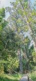 Θαλάσσιος περίπατος στο δάσος Tsitsikama Στοκ εικόνες με δικαίωμα ελεύθερης χρήσης