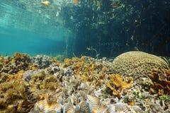 Θαλάσσιος πυθμένας με το λεπτά μαρούλι φύλλων και το κοράλλι εγκεφάλου Στοκ Φωτογραφίες