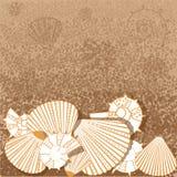 Θαλάσσιο σχέδιο με τα κοχύλια Στοκ Φωτογραφία