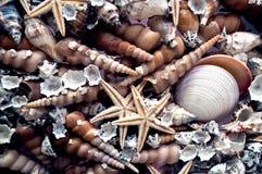 Θαλάσσιο υπόβαθρο ύφους από πολλά κοχύλια Στοκ φωτογραφίες με δικαίωμα ελεύθερης χρήσης