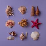 Θαλασσινά κοχύλια, αστέρι Ερυθρών Θαλασσών και κοράλλι Στοκ Φωτογραφίες
