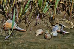 Θαλασσινά κοχύλια ΙΙΙ ακτών Κόλπων Στοκ εικόνα με δικαίωμα ελεύθερης χρήσης