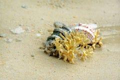 Θαλασσινά κοχύλια και κοράλλι στην άμμο στην παραλία Στοκ Φωτογραφία