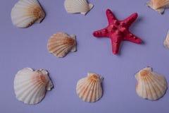 Θαλασσινά κοχύλια και κόκκινος seastar Στοκ φωτογραφία με δικαίωμα ελεύθερης χρήσης