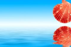 Θαλασσινά κοχύλια και νερό Στοκ εικόνες με δικαίωμα ελεύθερης χρήσης