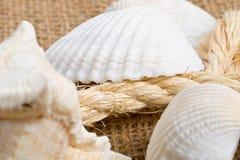 Θαλασσινά κοχύλια με το σχοινί στο καφετί burlap ύφασμα στοκ εικόνα με δικαίωμα ελεύθερης χρήσης