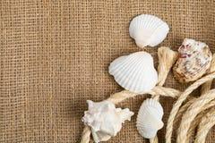 Θαλασσινά κοχύλια με το σχοινί στο καφετί burlap ύφασμα στοκ εικόνες με δικαίωμα ελεύθερης χρήσης