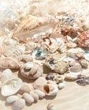 Θαλασσινά κοχύλια που βρίσκονται στον πυθμένα της θάλασσας στοκ εικόνες